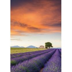 Puzzle Schmidt: Câmp cu lavandă, Provence, 500 piese